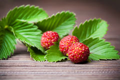 Ripe berries of wild strawberries on green leaves Stock Photos