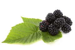 Ripe berry blackberry closeup. Stock Photo