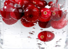 Ripe berry cranberry Stock Images
