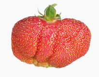 Ripe big strawberry Royalty Free Stock Photo