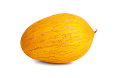 Ripe and big yellow melon  Royalty Free Stock Image