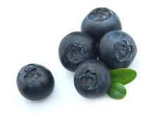 Ripe bilberry Stock Image