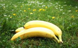 Ripe bio  bananas Royalty Free Stock Images