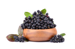 Ripe black chokeberry Stock Image