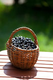 Ripe black currant berries in a basket Royalty Free Stock Photo