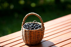 Ripe black currant berries in a basket Stock Images
