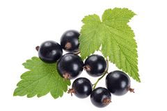 Free Ripe Black Currant Berries Isolated On White Background Stock Photos - 110216403