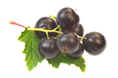 A ripe black currant in summer garden Royalty Free Stock Photo