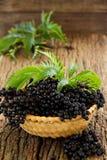 ripe black Elderberries Royalty Free Stock Images
