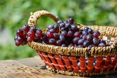 Ripe black grapes Stock Photography