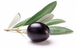 Ripe black olive with leaves. Royalty Free Stock Photo