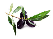 Ripe black olives with leaves Stock Photography