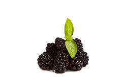 Ripe Black Raspberries Stock Photography
