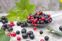 Ripe black and red berry currants Royalty Free Stock Image