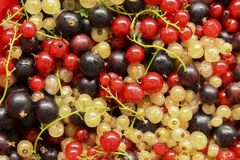 Currant. Ripe black, red and white currants in placer closeup as background Stock Image