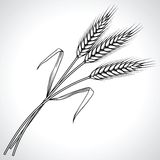 Ripe black wheat ears isolated, vector Stock Photography