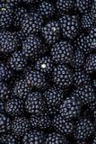 Ripe blackberries background Royalty Free Stock Photos