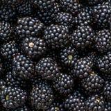 Ripe blackberries background Stock Photos