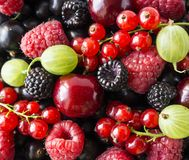 Ripe blackberries, blackcurrants, cherries, red currants, raspberries and gooseberries. Mix berries and fruits. Top view. Background berries and fruits royalty free stock photography