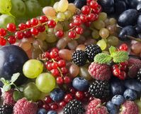 Ripe blackberries, blueberries, raspberries, red currants, grapes and plums. Mix berries and fruits. Top view. Background berries. Various fresh summer fruits Royalty Free Stock Photography