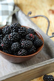 Ripe blackberries in a bowl Stock Photography