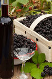 Ripe blackberries in bowl and fruit box Royalty Free Stock Photo