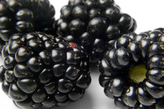 Ripe blackberries close up Royalty Free Stock Photography