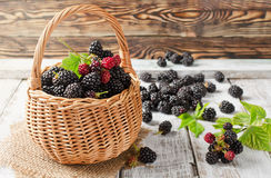 Ripe blackberries Royalty Free Stock Photography