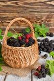 Ripe blackberries Stock Photos