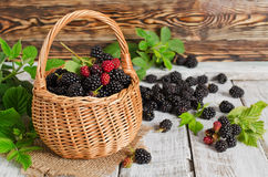 Ripe blackberries Stock Photo