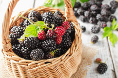 Ripe blackberries Stock Photography