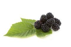 Ripe blackberries. Royalty Free Stock Photography