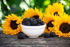 Ripe blackberries in white bowl with sunflower bouquet on wooden table, summer theme royalty free stock image