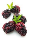 Ripe Blackberry Stock Images