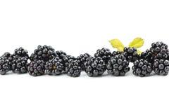Ripe blackberry Stock Photography