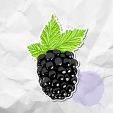 Ripe blackberry Stock Photography