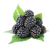 Ripe blackberry fruits Royalty Free Stock Photo