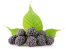 Ripe blackberry with green leaf Royalty Free Stock Photo