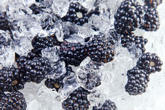 Ripe blackberry with ice Royalty Free Stock Images