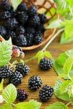 Ripe blackberry Royalty Free Stock Photo