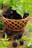 Ripe blackberry Royalty Free Stock Photos