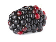 Ripe blackberry over white. Background Royalty Free Stock Photos