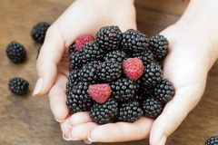 Ripe blackberry and strawberry in woman hands. Ripe, colored blackberry and strawberry in woman hands Stock Photo