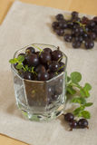 Ripe blackcurrant. In a glass gathered fresh currant Royalty Free Stock Photo
