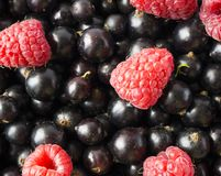 Ripe blackcurrants and raspberries. Mix berries. Top view. Background of red and black berries. Various fresh summer fruits Royalty Free Stock Photography