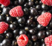 Ripe blackcurrants and raspberries. Mix berries. Top view. Background of red and black berries. Various fresh summer fruits Stock Photo