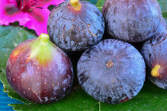 Ripe blue figs, close up shot Royalty Free Stock Photos