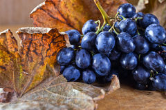Ripe blue grape Royalty Free Stock Photos