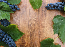 Ripe blue grapes with green leaves on a wooden background closeup. Stock Photography
