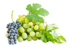 Ripe blue and green grapes Royalty Free Stock Photos